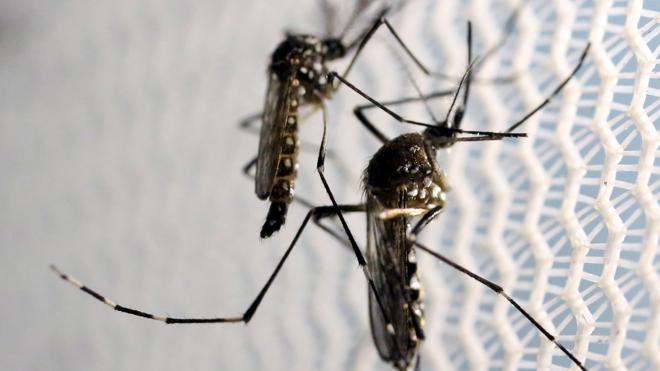 Revelan la estructura de una proteína clave en la replicación del virus Zika
