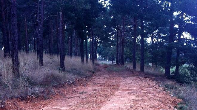 Ecologistas en Acción denuncia el mal estado en el que se encuentra el Monte San Isidro