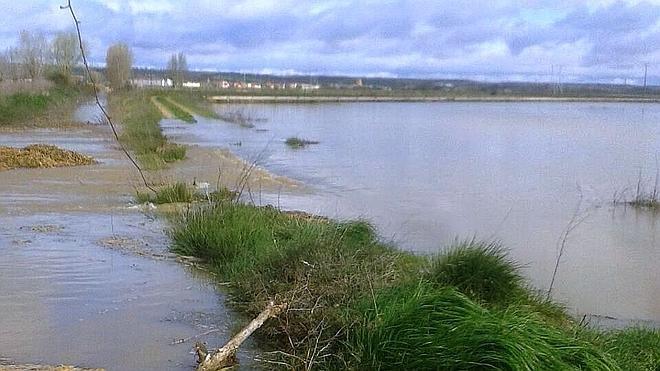 Asaja advierte de las pérdidas de miles de hectáreas agrícolas