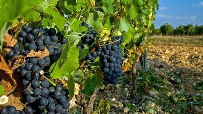 La D.O. Tierra de León presentará sus vinos en la Feria Alimentaria de Barcelona