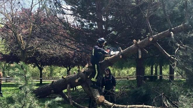 Los bomberos retiran un pino caído en el Paseo de Salamanca