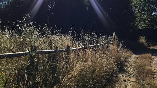 El PP denuncia que la maleza «engulle» la senda peatonal del Arroyo del Valle en Ferral