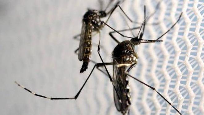 Sanidad confirma un total de 11 casos de infección por virus Zika en España