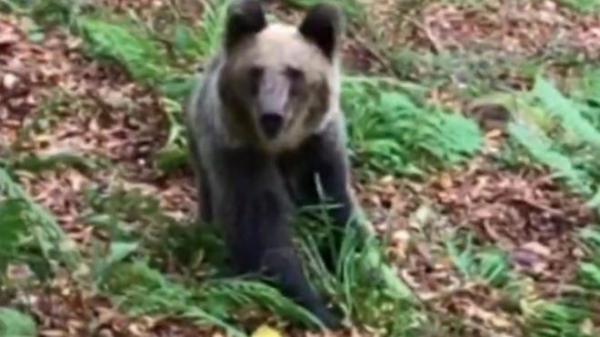 Cuando el oso se acerca