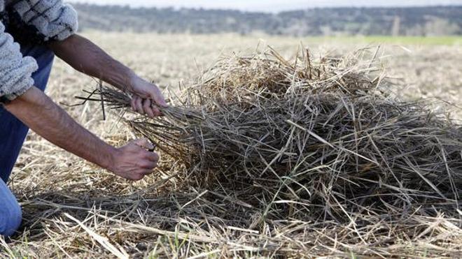 La Consejería de Agricultura y Ganadería publica la orden que autoriza la quema de rastrojos de cereales