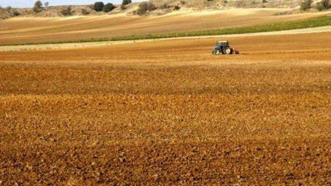 UPA-COAG cifra en 844 millones las pérdidas de agricultores y ganaderos de la Comunidad por los bajos precios