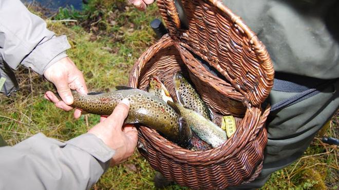 La pesca de la trucha, a partir del 1 de abril