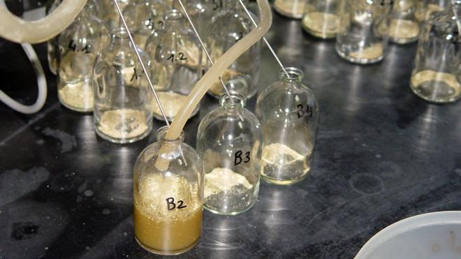 Premiada una investigación de la ULE sobre sistemas 'in vitro' en alimentación de rumiantes