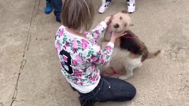 Localizan a la perra desaparecida por la que ofrecían una recompensa de 500 euros